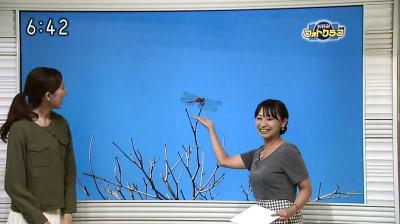 Hiyamachihirookonomiwaido_201410160