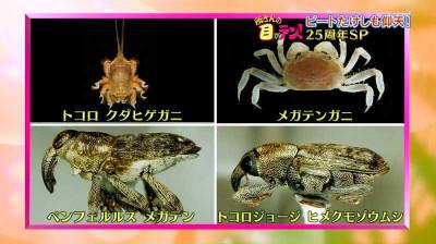 Tokorosan_nittere_20141102070834